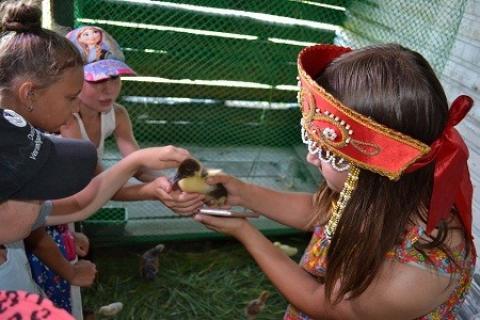 Покормить птенцов с рук - одно из детских удовольствий