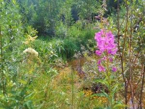 Сбор лекарственных трав